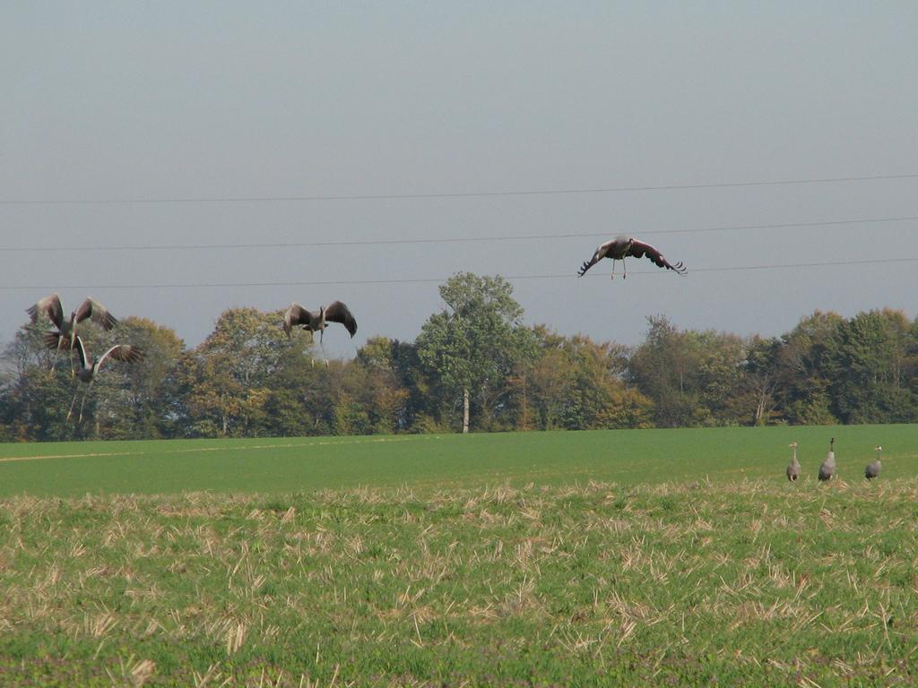 Opstijgende vogels