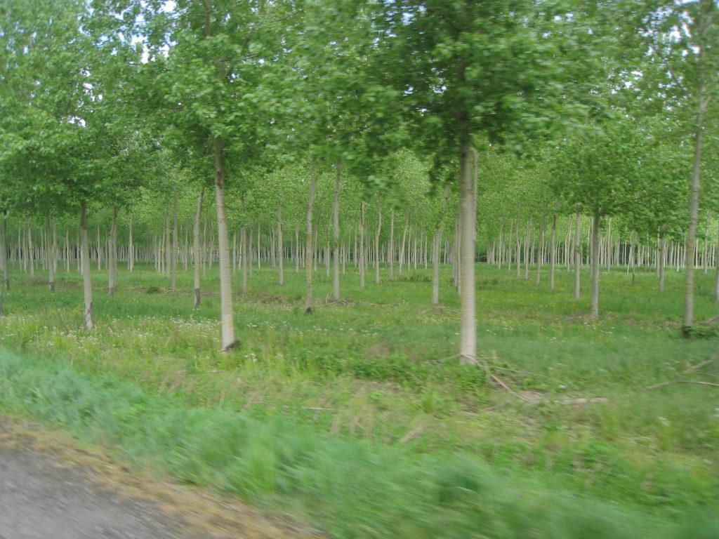 eenvormige bomen