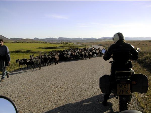 Kudde schapen en motor