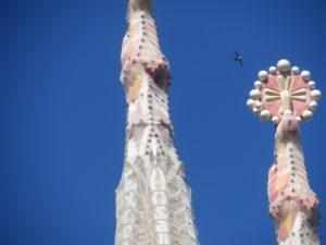 Torentje van de Sagrada Familia