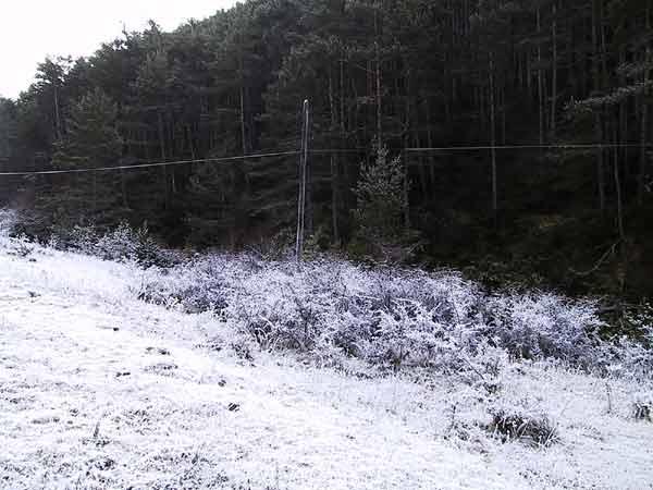 Bos, met daarvoor een berijpt veld