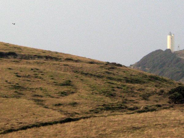 Vuurtoren en Torenvalk