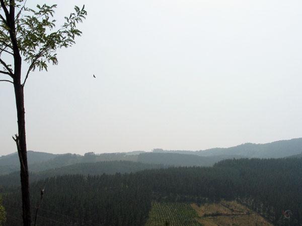 Roofvogel in de lucht