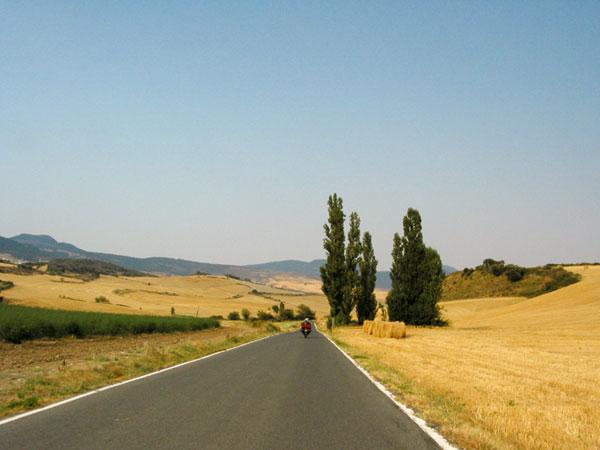 Gele stoppelvelden en wat cypressen