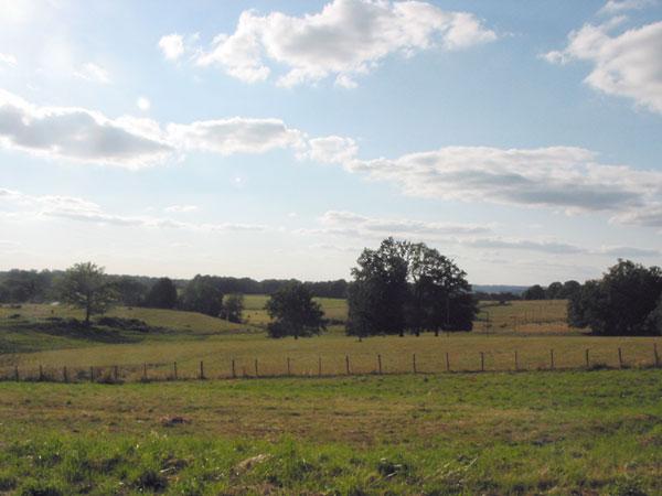 Heuvelig landschap met gras en bomen