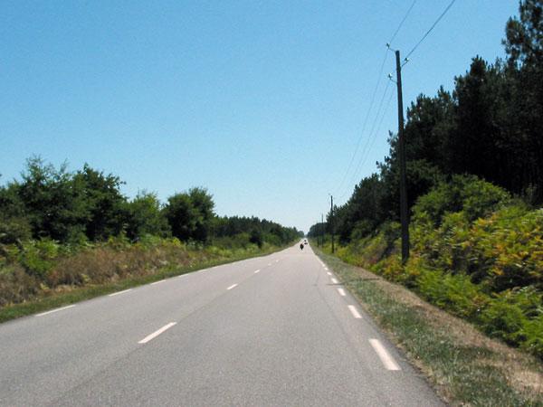 Eindeloze rechte weg door het bos