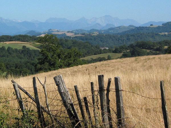 Golvend graanveld en uitzicht op bergen