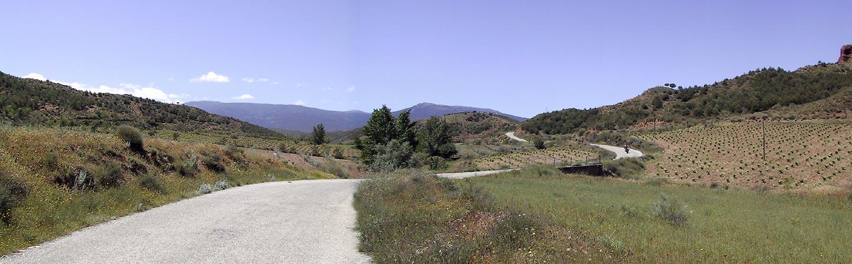 Bermen in bloei, druiven en ander fruit en een weg die door de vruchtbare heuvels slingert
