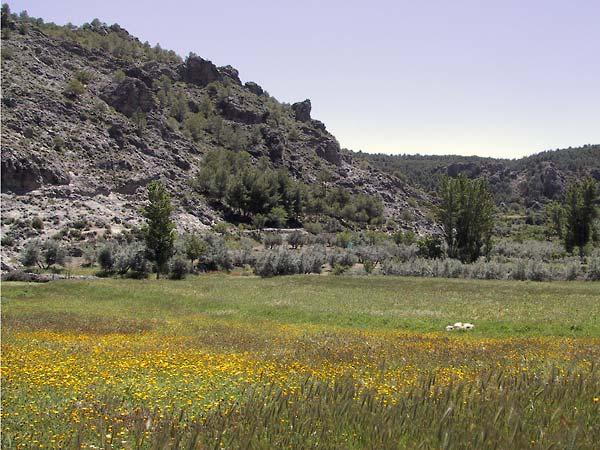 Wei vol bloemen, zwarte rotsen als achtergrond