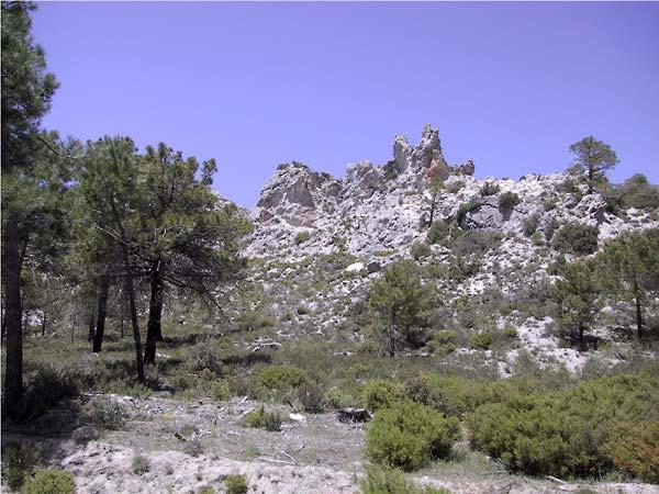 Spierwitte korrelige rotsen, wat bomen ervoor