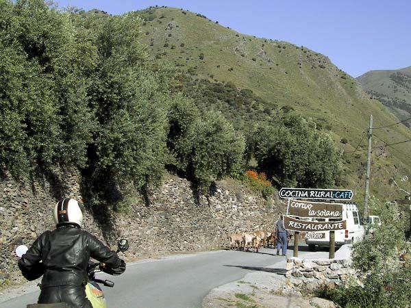 Bordje met Cocina rural, restaurante, en daarachter een kudde geiten