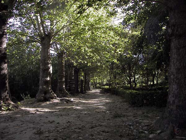 Schaduwbomen in ee rij, een zandpad, lage heggetjes