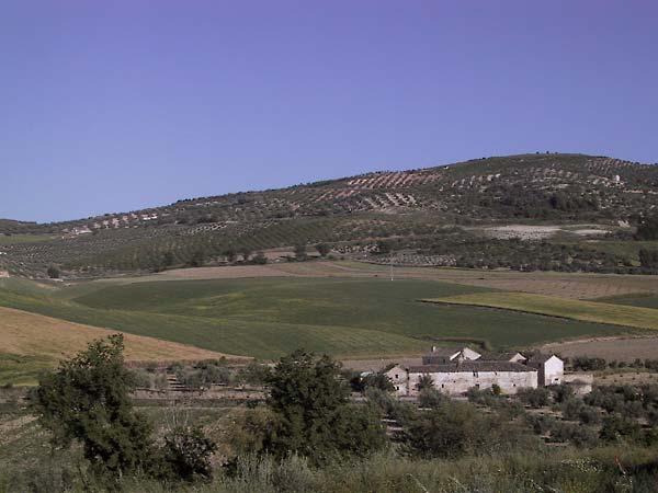 Oude boerderij, met olijfbomenheuvel op de achtergrond