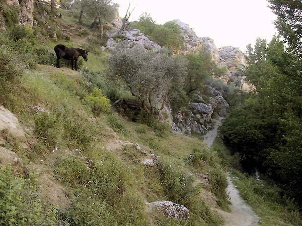 Zicht op het pad met halverwege de helling een muildier