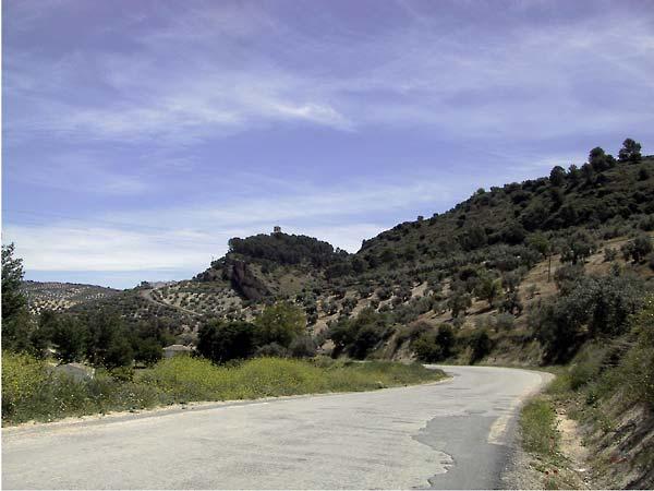 Heuvels met regelmatig patroon van olijfbomen, bloemen in de berm