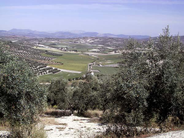 Zicht over heuvelig landschap met olijfbomen, wieden en woeste gronden