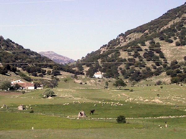 Gras met schapen en paard, en hoge spaarzaam begroeide bergen aan weerszijden