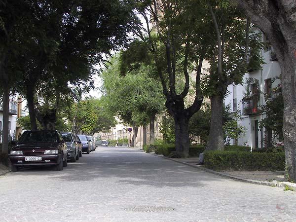 Straat met statige huizen achter grote bomen
