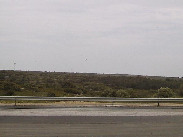 Vogels boven vlak landschap met struiken en windmolen