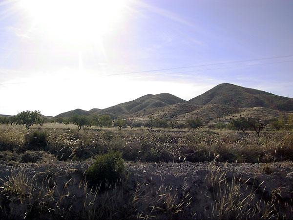 De zon op olijfbomen, afgeronde heuvels daarachter