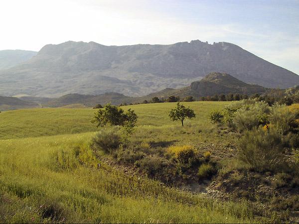 Onwaarschijnlijk sappig groen in zonnige heuvels