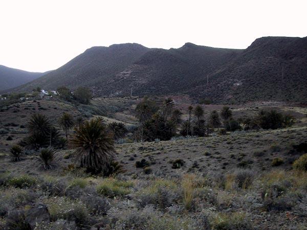 Palmen in een lager gedeelte tussen de heuvels