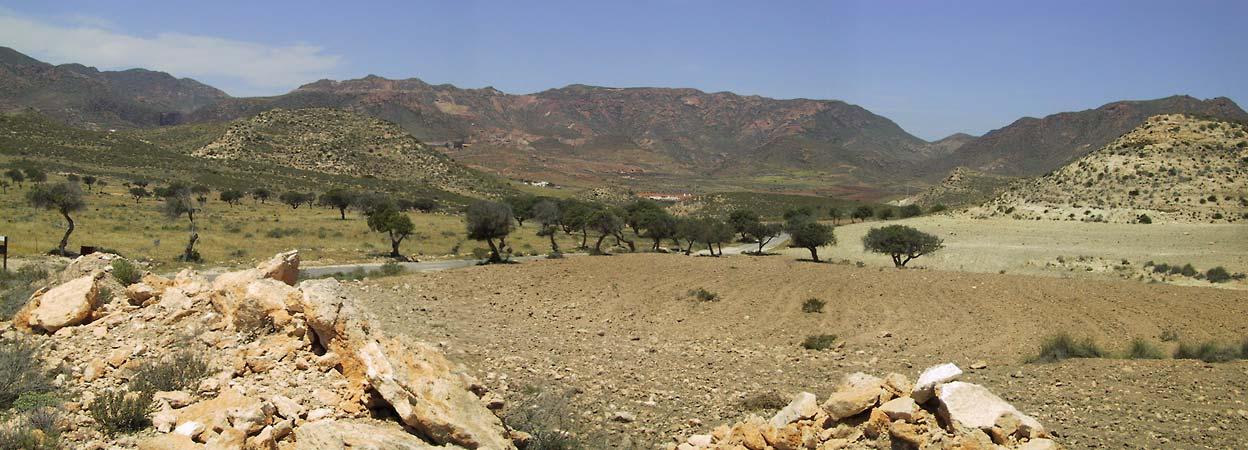Een stukje groen met olijfbomen, en verder bijna kale rots