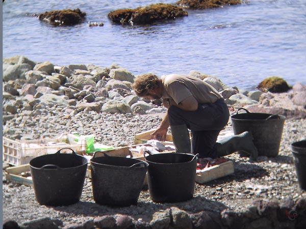 Man met laarzen geknield bij kratten gesorteerde vis