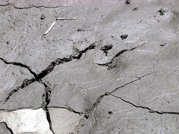 Opdrogende modder met hele kleine kikkertjes