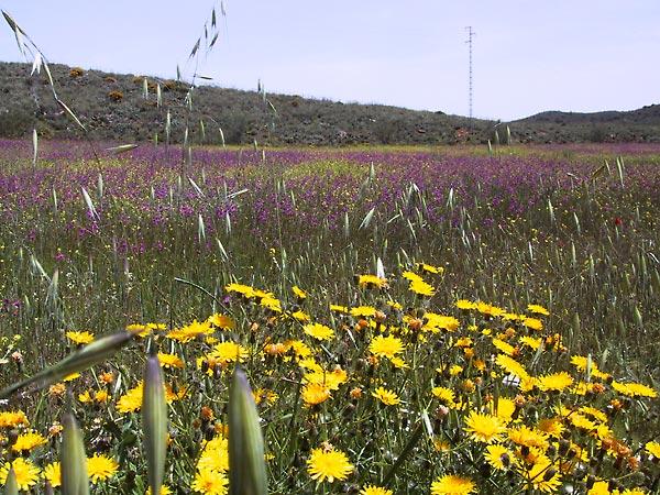 Gele bloemen op de voorgrond, paarse bloemen daarachter