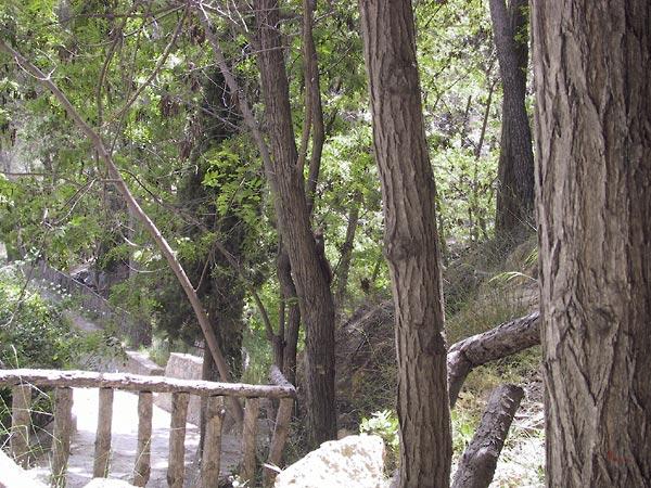 pad met houten relinkje tussen naaldbomen