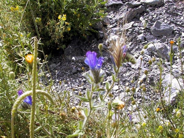 Geelgebloemde distels, blauwe bloemen en aren van graan