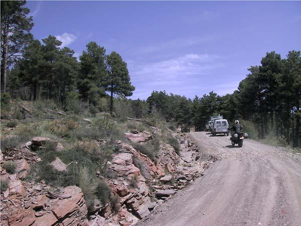 Een paar auto's op de weg in het bos