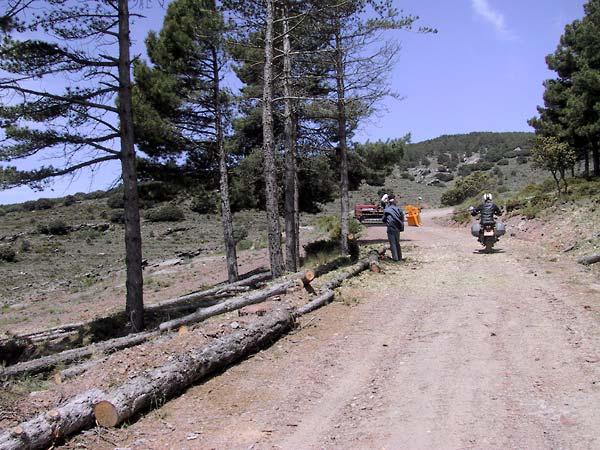 Sylvia rijdt tussen de houthakkers door