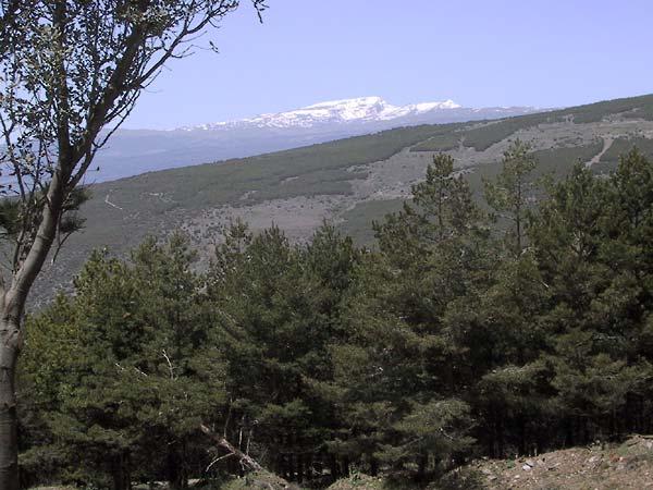 Bos op voorgrond, groene berg daarachter, berg vol sneeuw nog verder