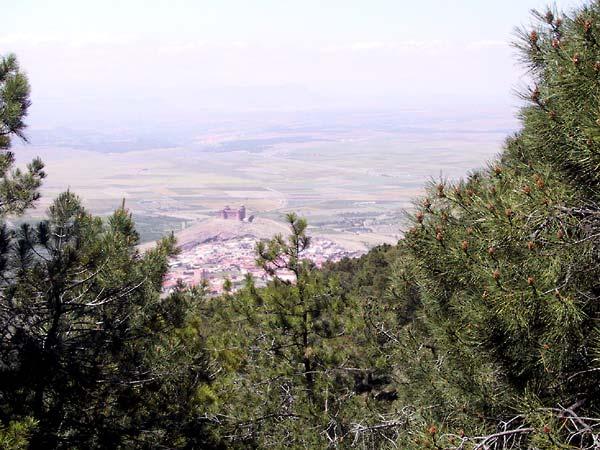 Tussen de naaldbomen door zicht op vlakte met een kasteel op een heuvel