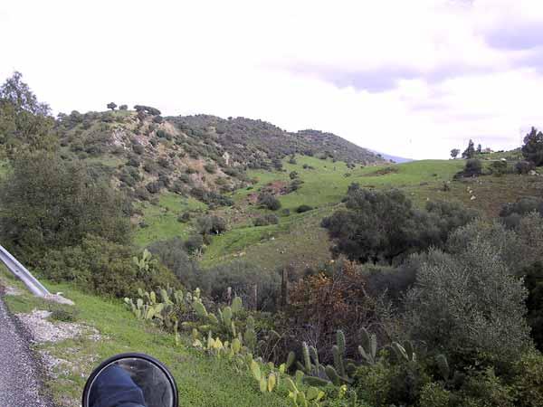 Cactussen, struikgewas, gras en schapen: een Arcadisch landschap
