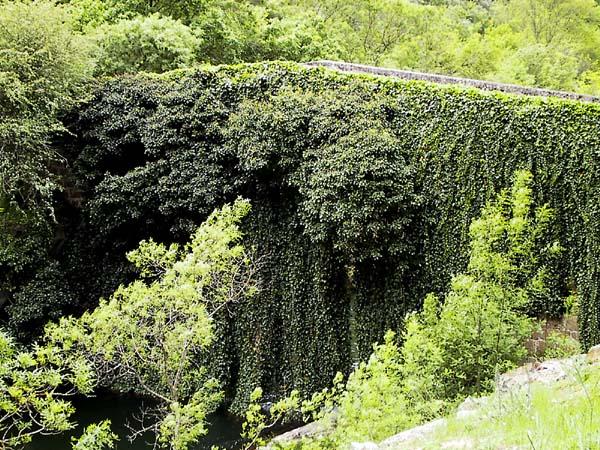 Bruggetje, begroeid met klimplanten